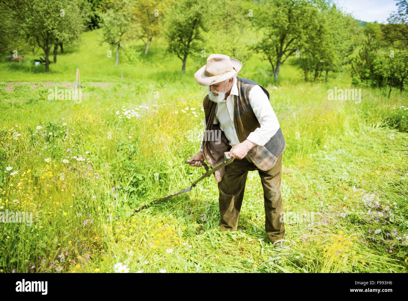 Ganz und zu Extrem Alter Bauer mit Sense um zu mähen den Rasen traditionell mit Bart &FF_36