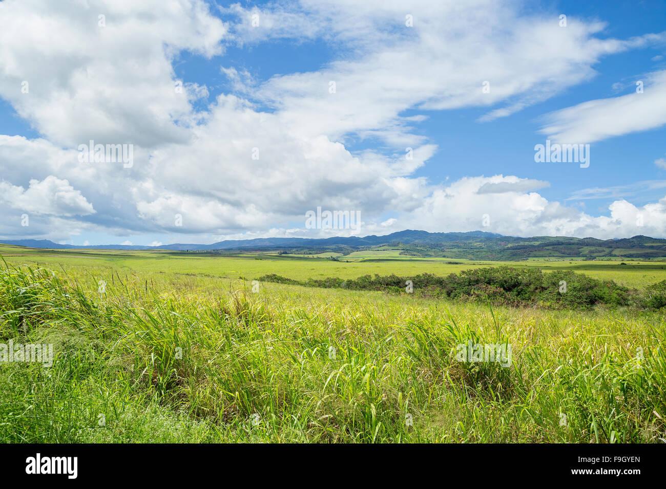 Kauai üppige Landschaft Stockbild