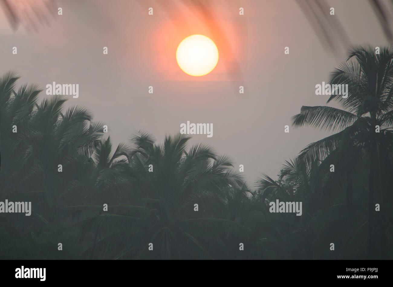 Landschaft-Sonnenaufgang im Nebel gegen eine dunkle Kontur der Palmen und Blätter, eine Landschaft, Sonnenaufgang, Stockbild
