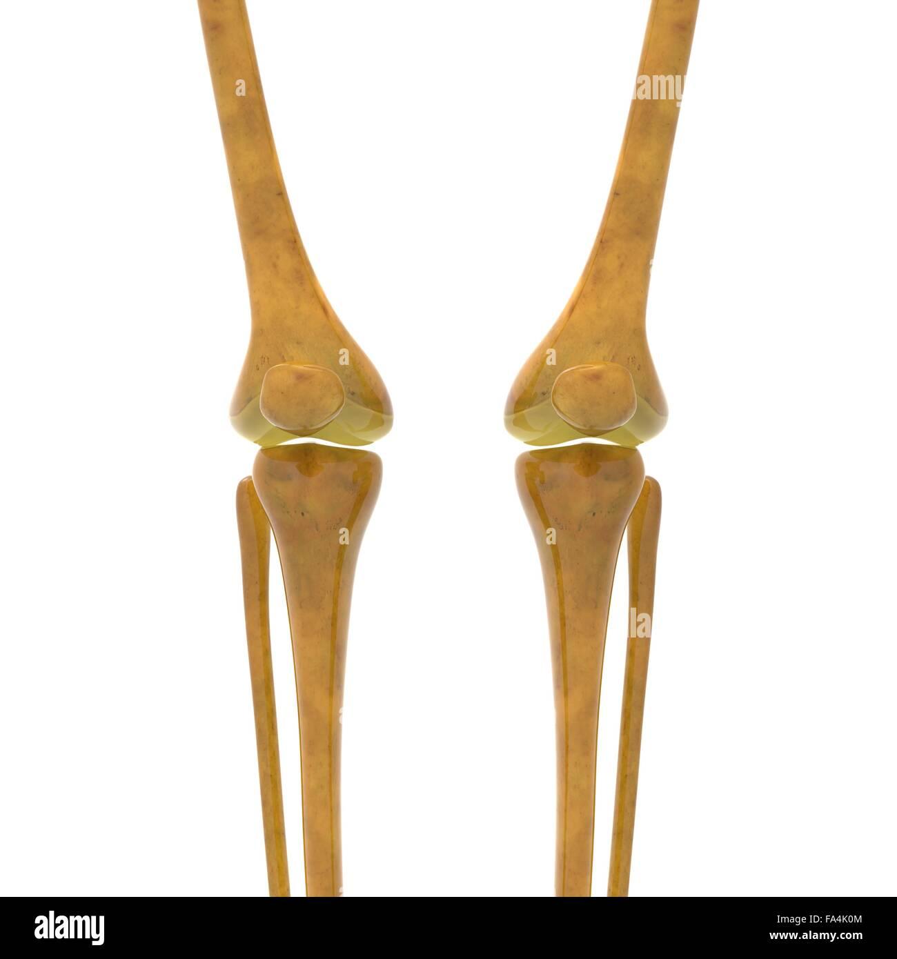 Medical Infographic Human Body Illustration Stockfotos & Medical ...