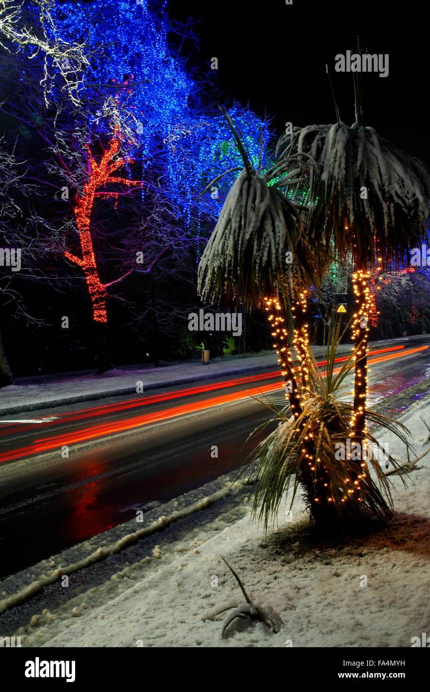 Reihe von Baum und Urlaub blaue Beleuchtung Stockbild