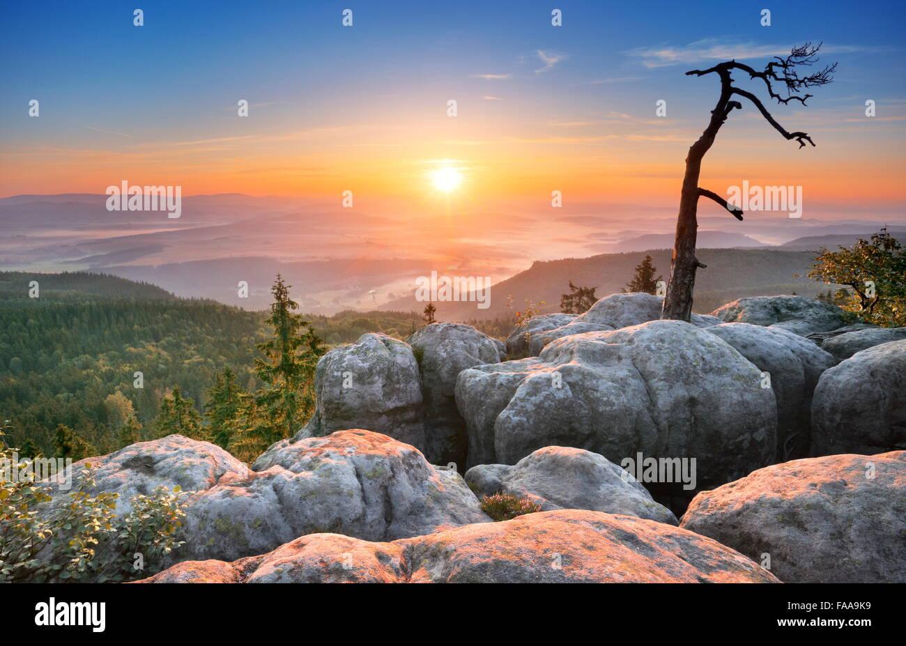 Einzelne allein Baumlandschaft in Sudeten bei Sonnenaufgang, Nationalpark, Polen Stockbild