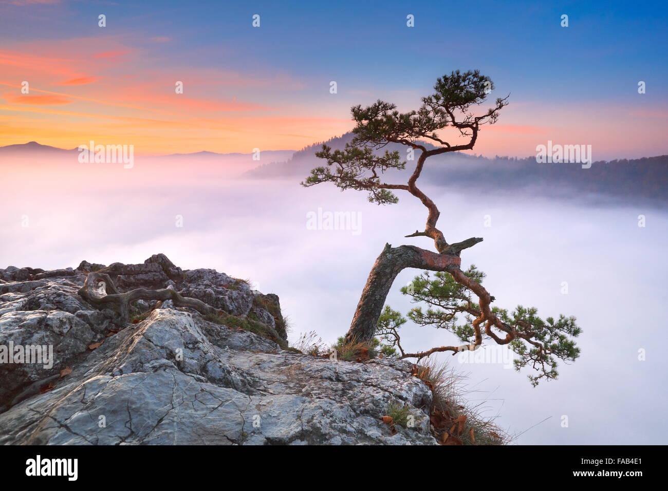 Allein Baum an Pieniny-Gebirge, Polen Stockbild