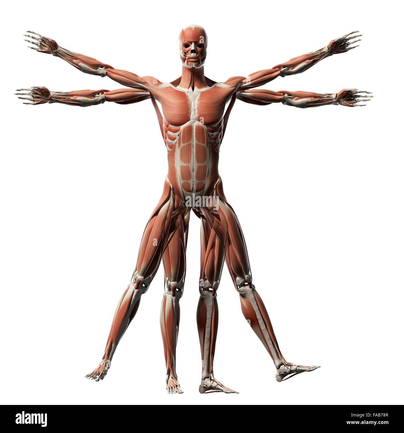 Großzügig Menschliche Anatomie Renaissance Fotos - Anatomie Ideen ...