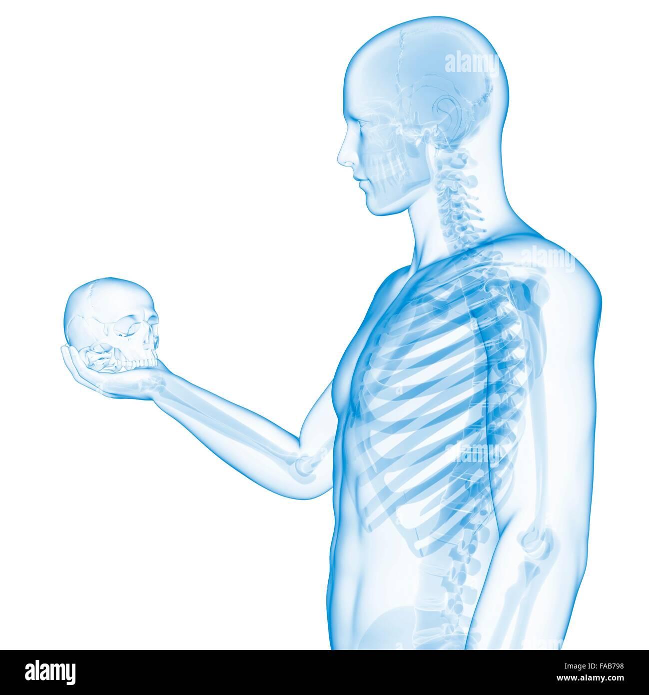 Großartig Menschliche Skelettstruktur Bilder - Anatomie Ideen ...