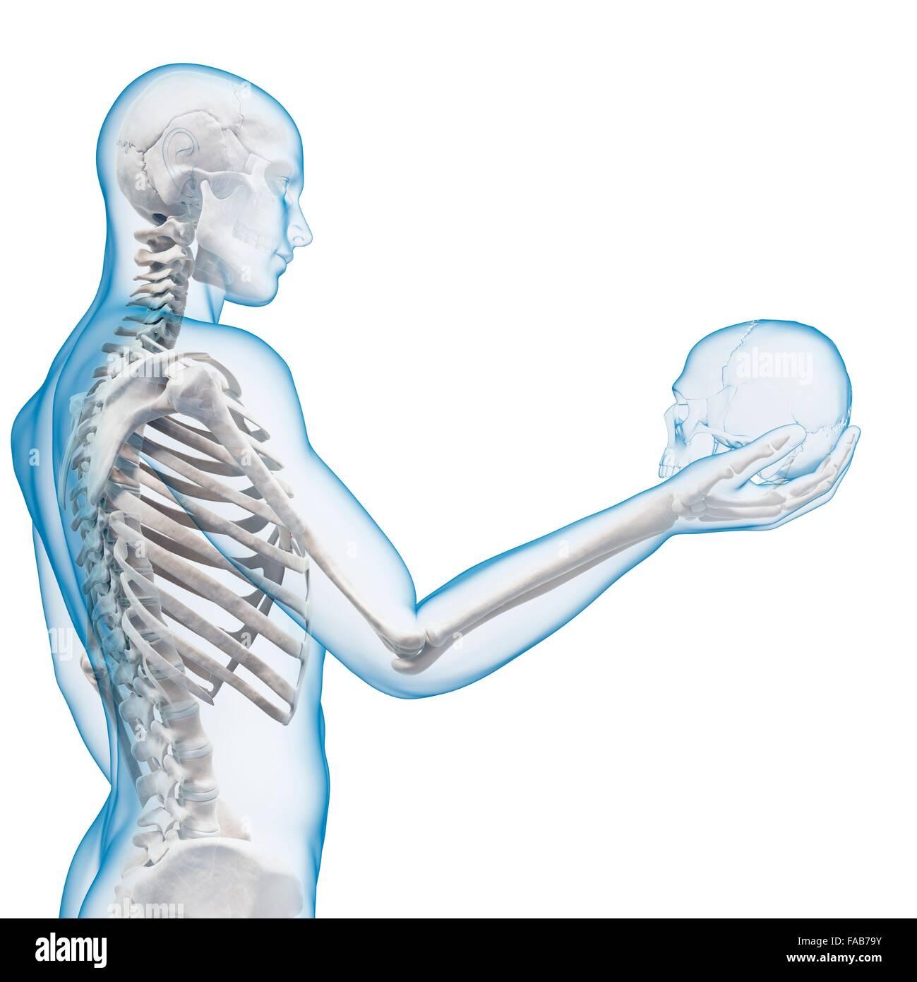 Beste Menschliche Anatomie Struktur Bilder - Menschliche Anatomie ...