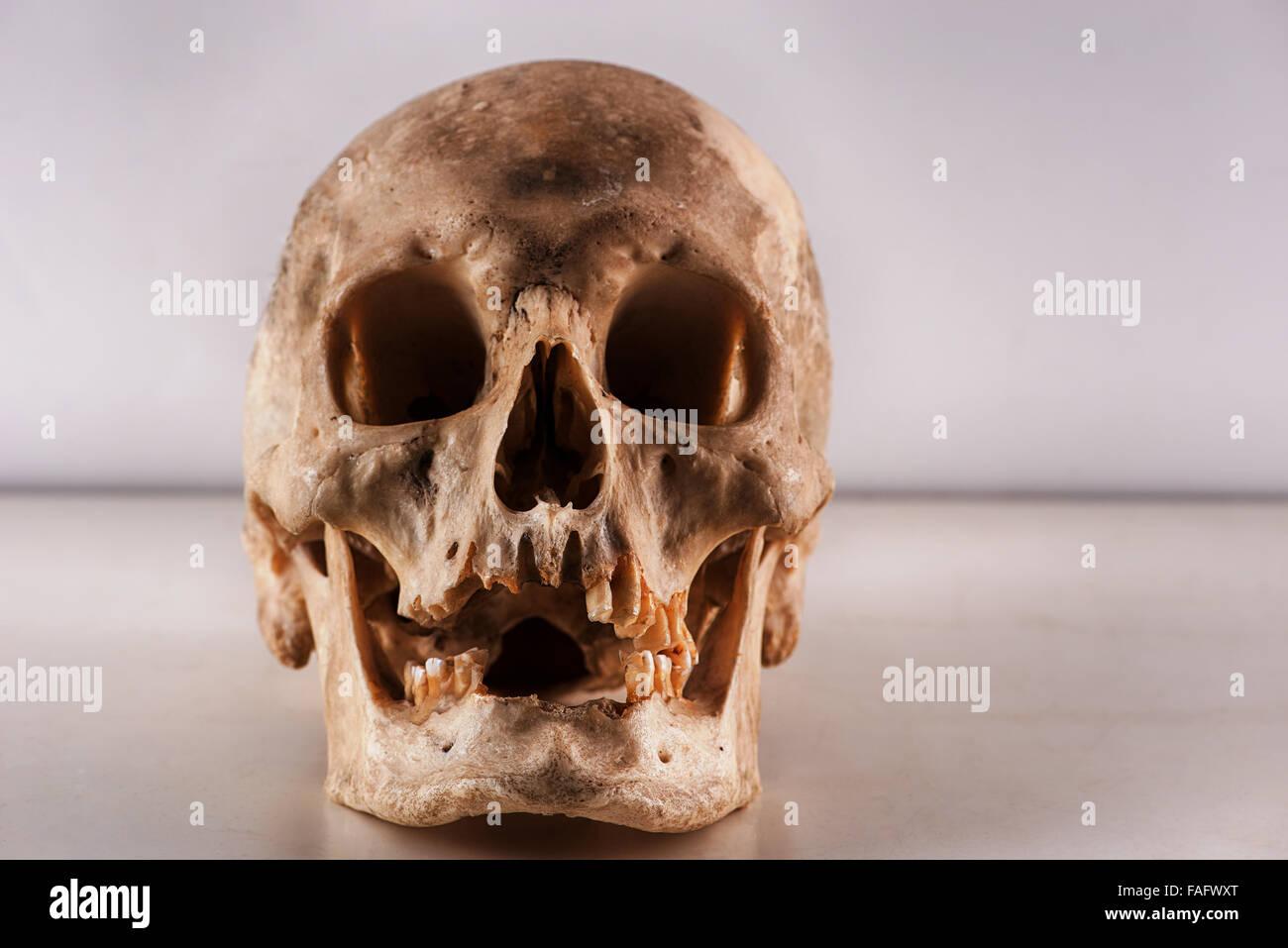 Anatomie und Physiologie des echten menschlichen Schädel Schädel für ...