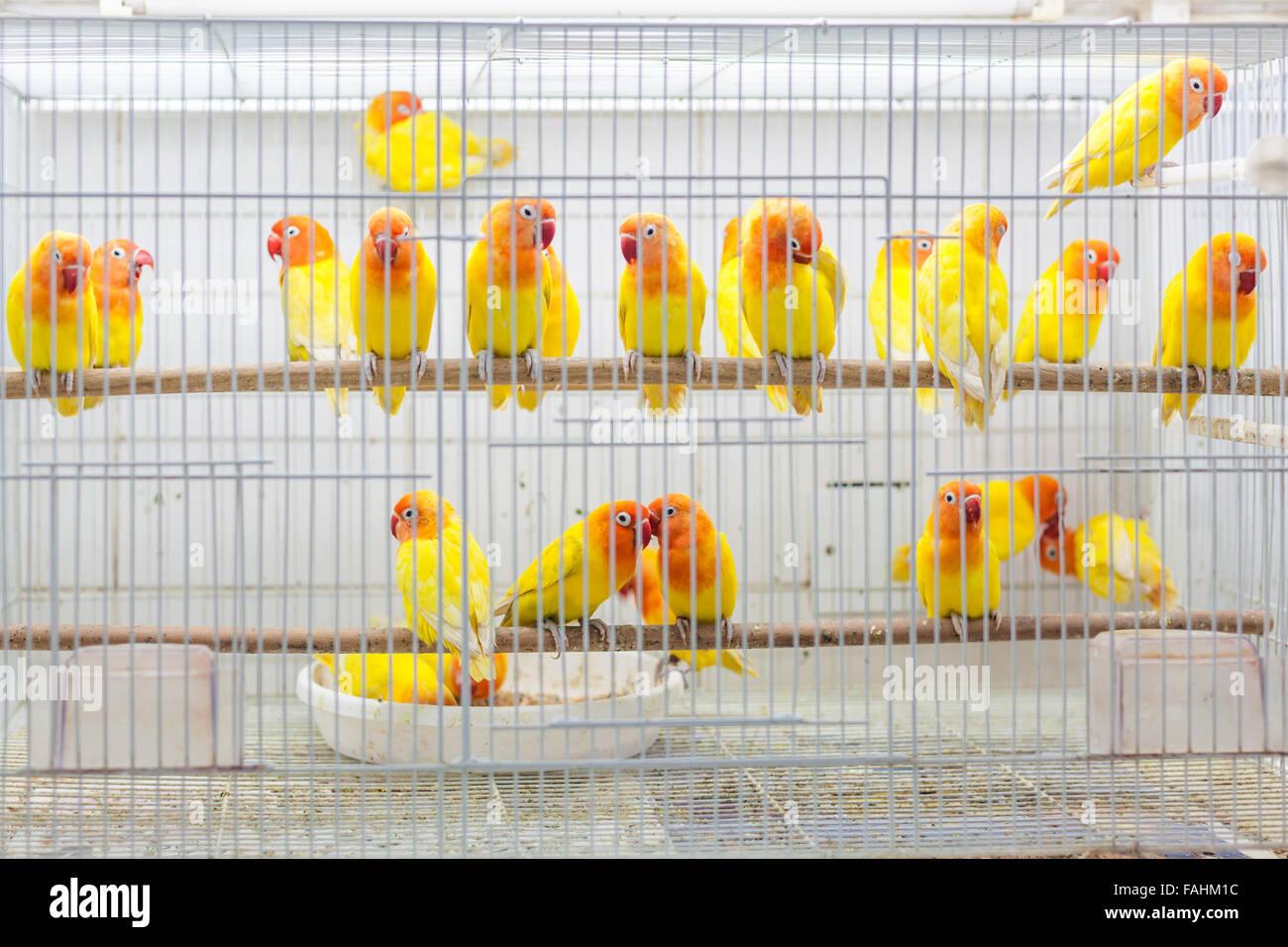Vögel zu verkaufen im Souq Waqif, Doha Stockbild