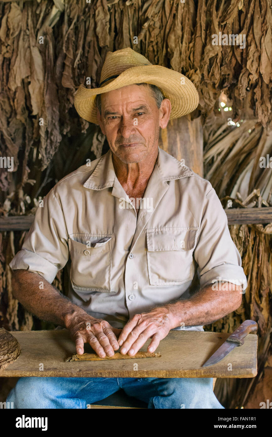 Zigarre Rollen, kubanischen Tabak Landwirt Cigar Maker Roller Vinales Tal, Kuba Stockbild