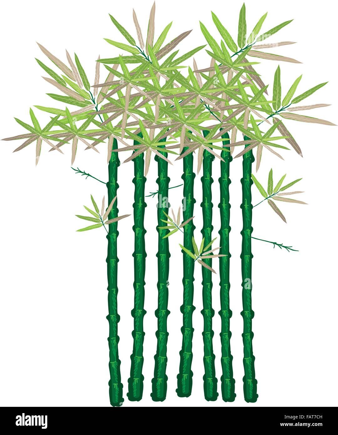 Eine Illustration Set Landschaftsbau Baum Symbol Oder Isometrische Bambus  Pflanze Für Garten Dekoration