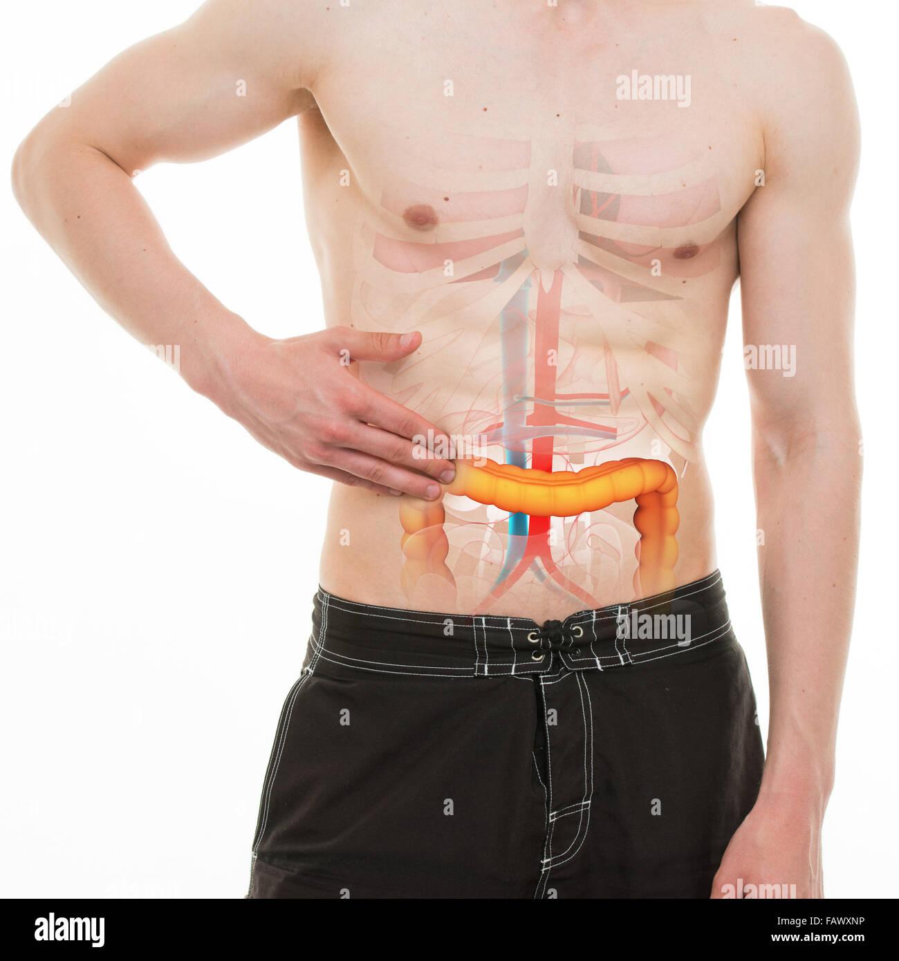 Bauchschmerzen - Darm Darm rechts Schmerzen - echter Anatomie ...