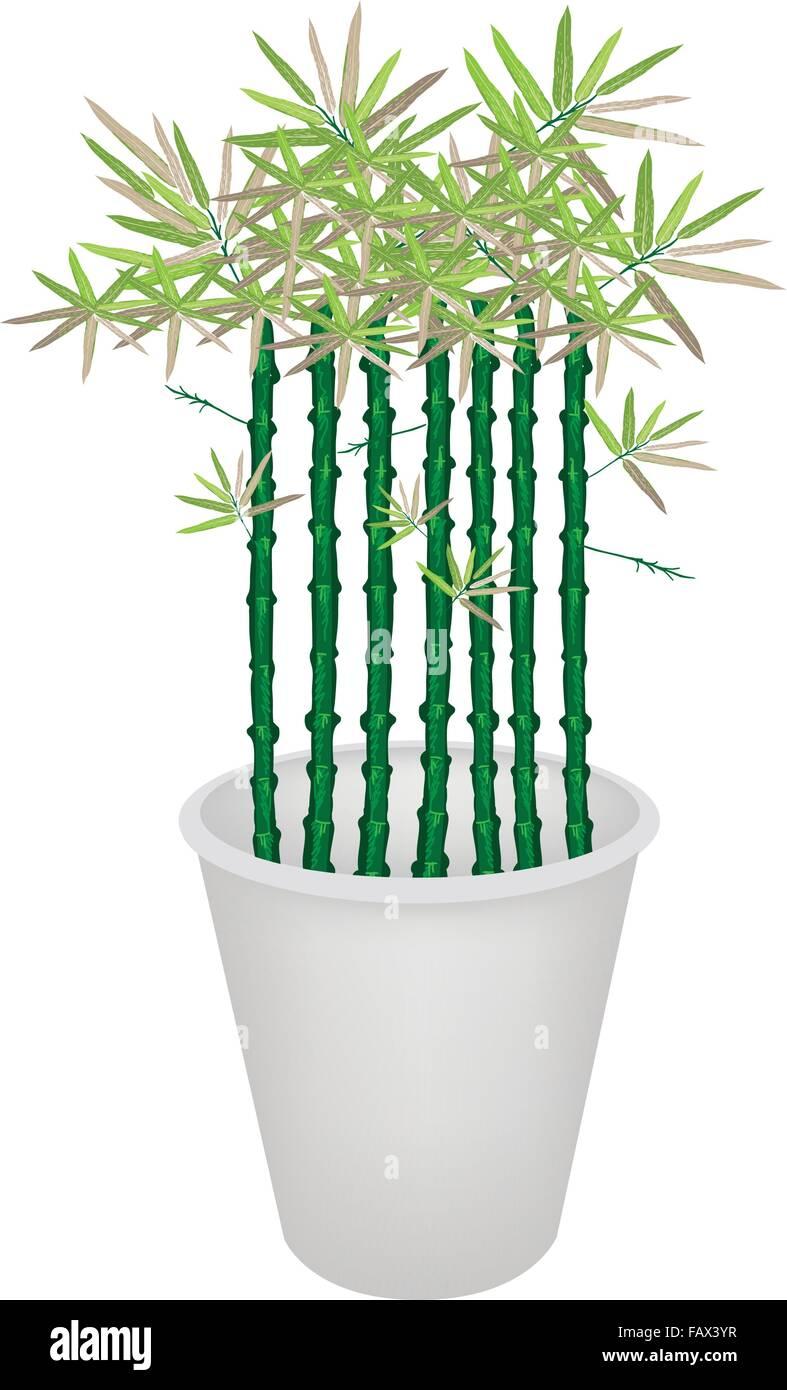 Beste Japanischer Garten Bambus Bilder   Hauptinnenideen   Kakados.com