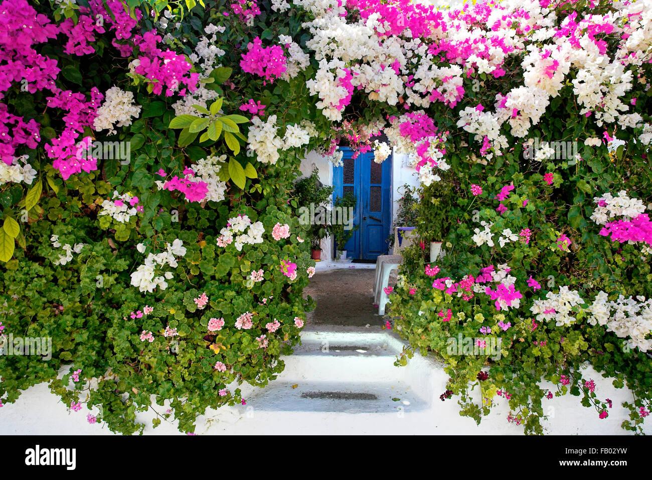 Blühende Blumen im Dorf Kritinia, Rhodos, griechische Dodekanes Stockbild