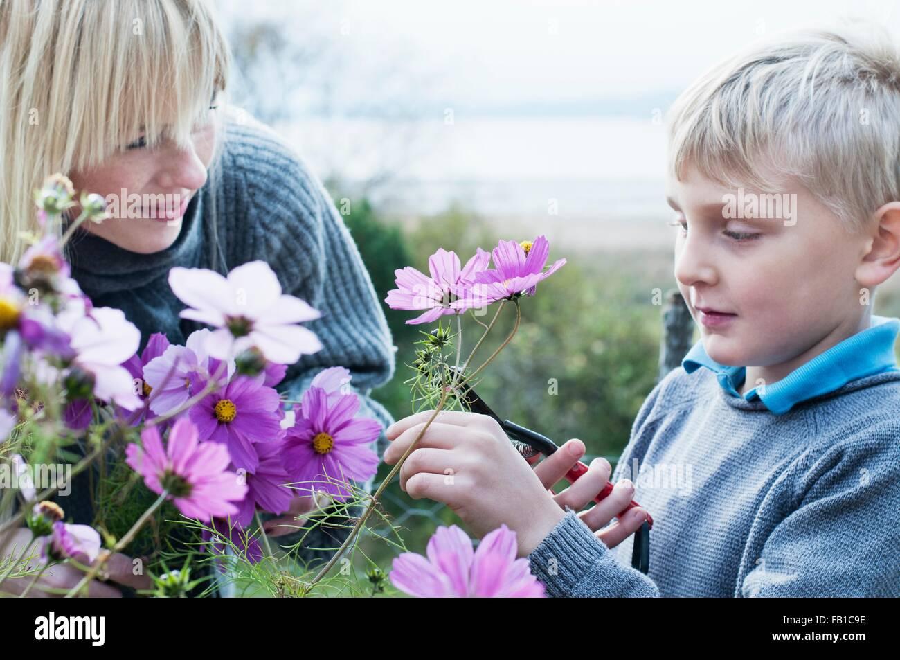 Mutter und Sohn schneiden Blumen im Bio-Garten Stockbild