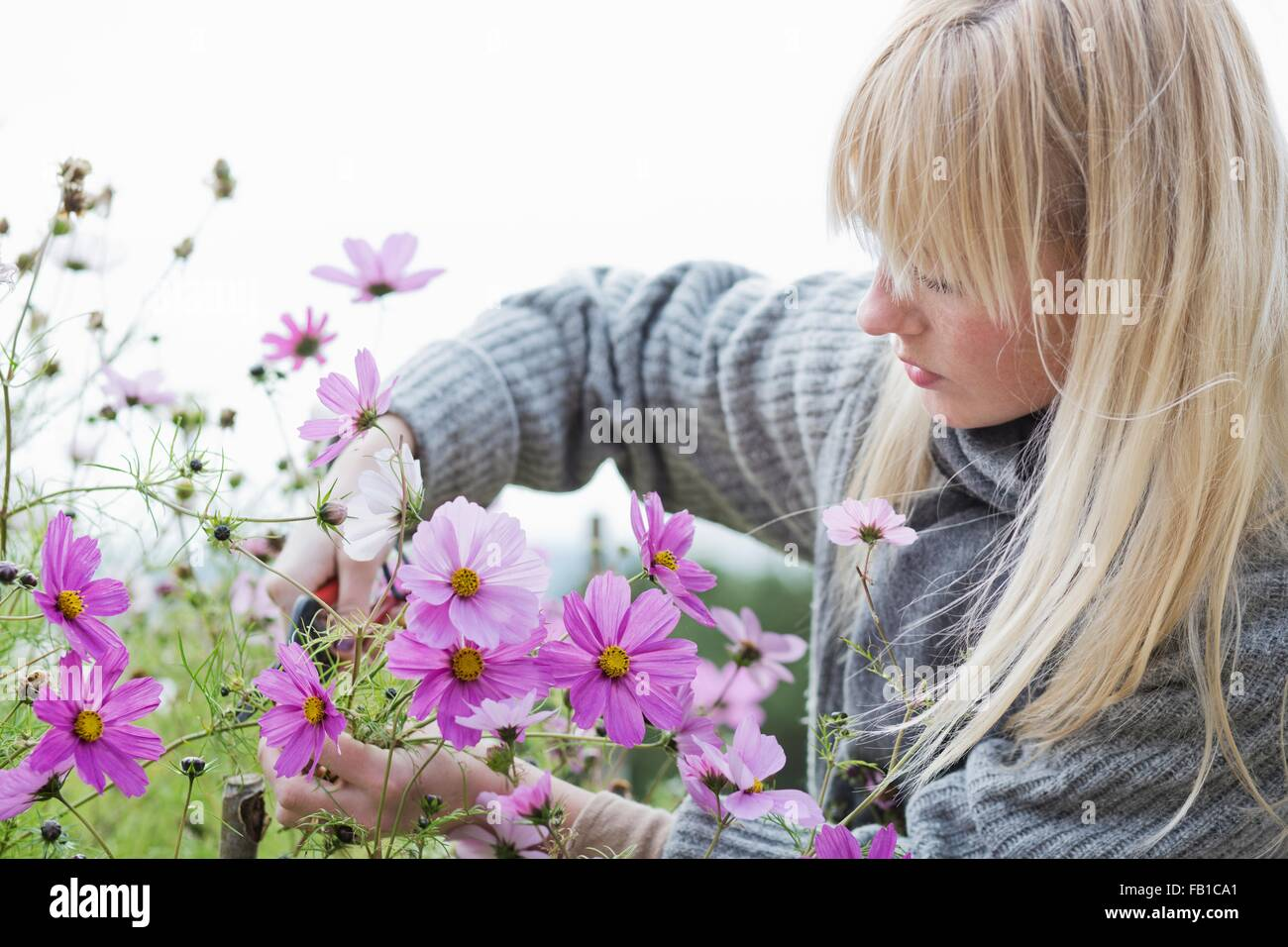 Mitte adult Frauenbeschneidung Bio Blumen im Garten Stockbild