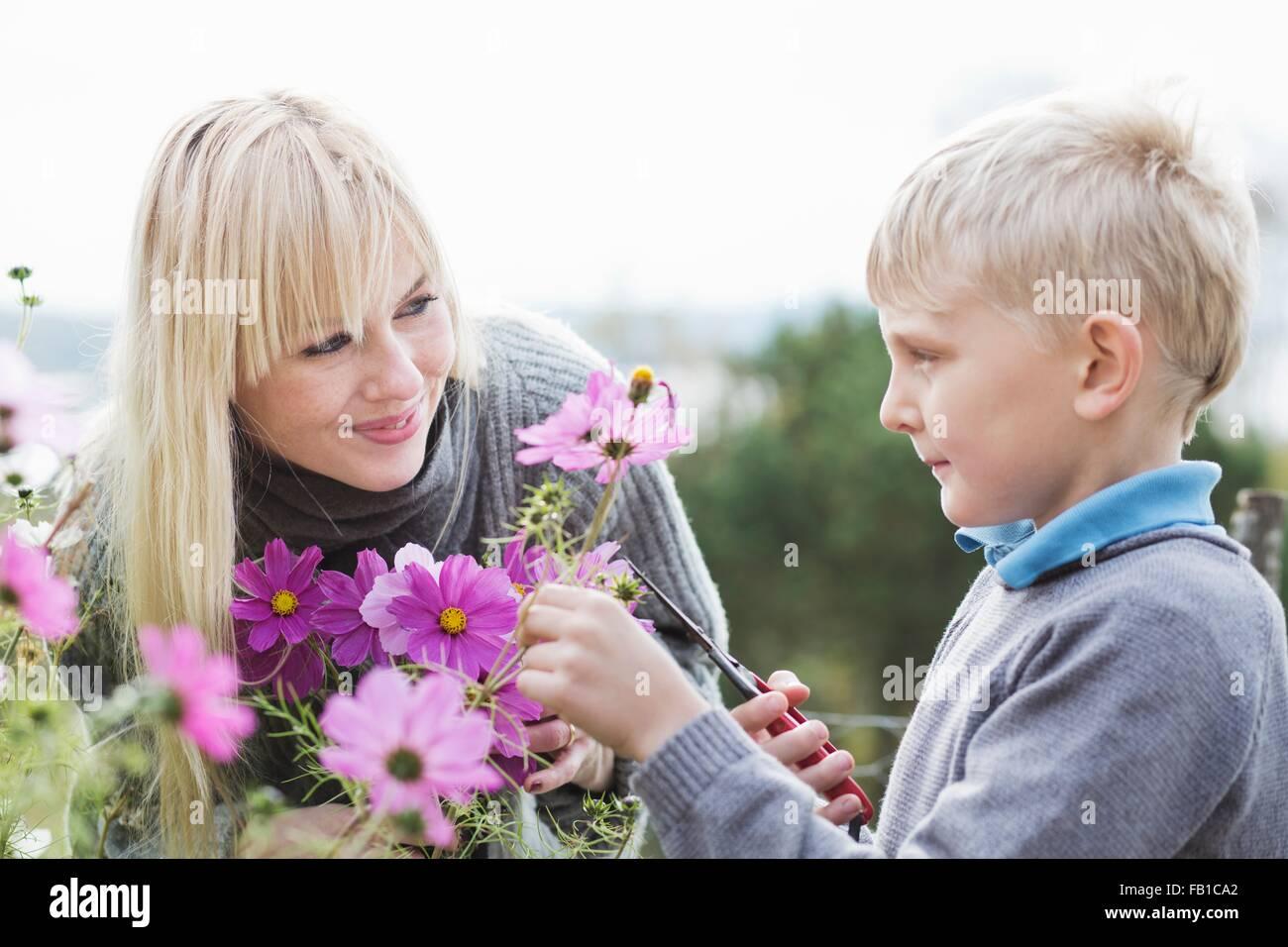 Mutter und Sohn schneiden Bio-Blumen im Garten Stockbild