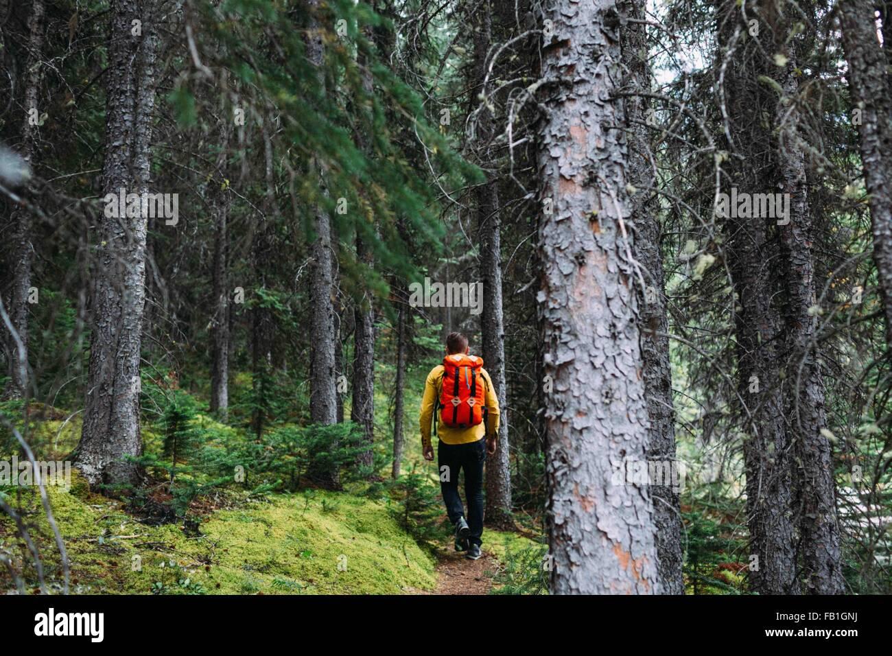 Rückansicht des Mitte erwachsenen Mannes orange Rucksack trekking durch Wald, Moraine Lake, Banff Nationalpark, Stockbild