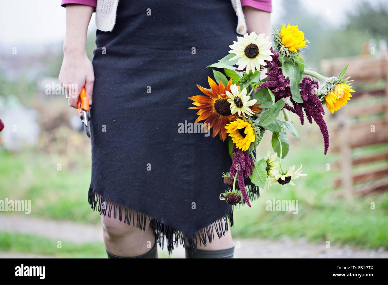 Taille abwärts Blick auf Frau schneiden frische Blumen bei Zuteilung Stockbild