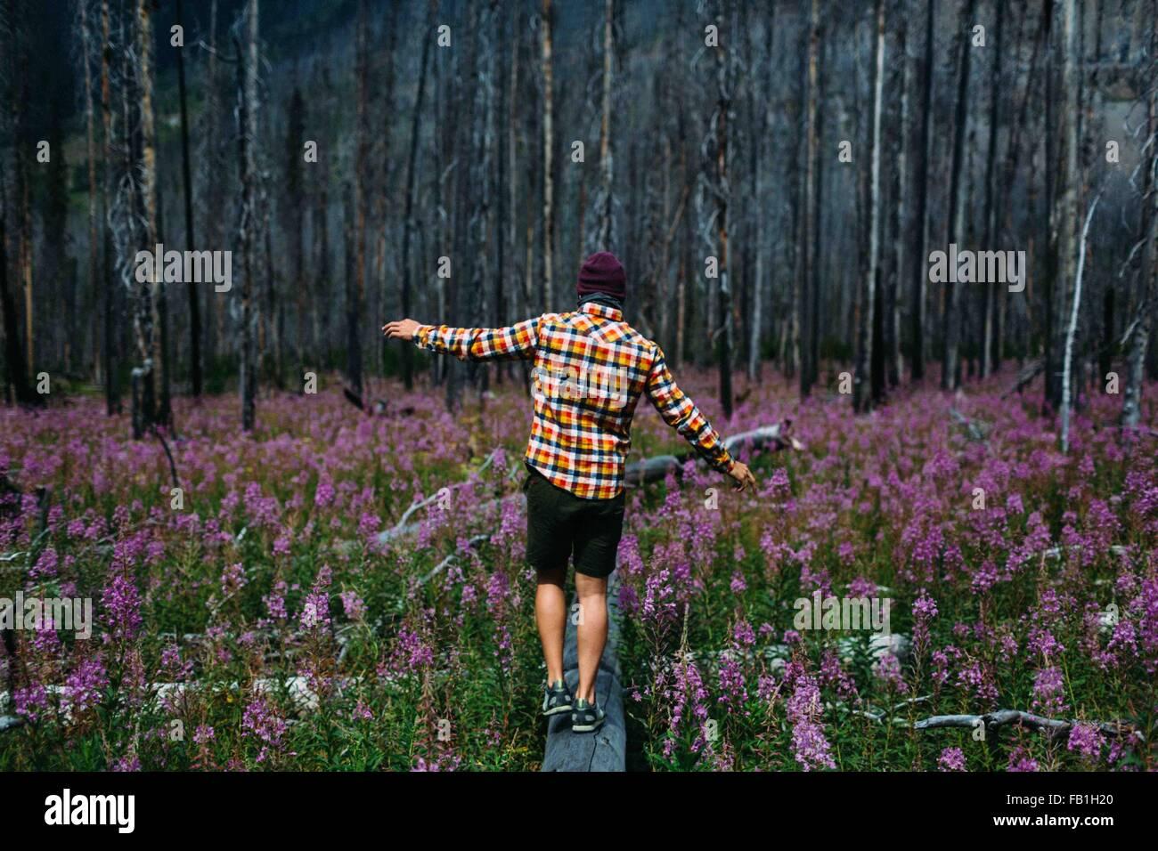Rückansicht des Mitte erwachsenen Mannes balancieren auf umgestürzten Baum im Bereich von Wildblumen, Stockbild