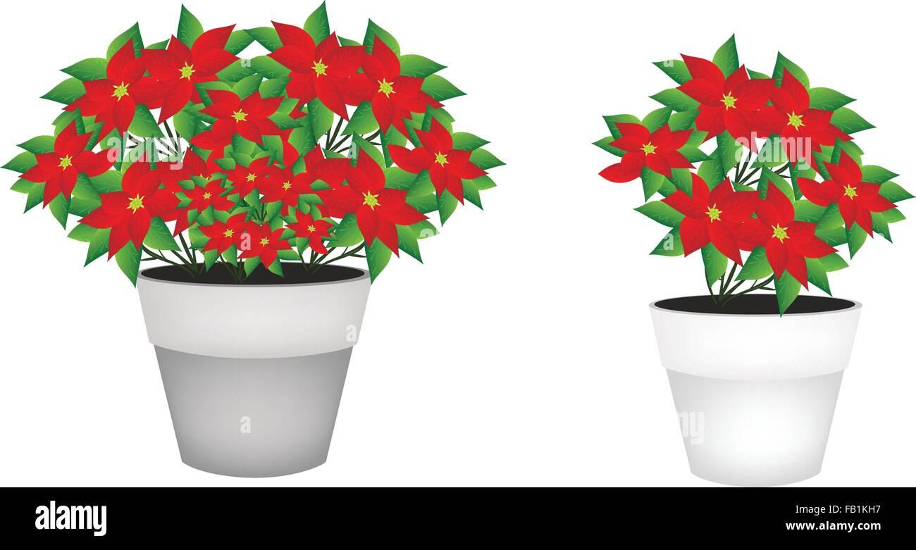 Abbildung von Weihnachten Weihnachtsstern Blume in einem Blumentopf ...