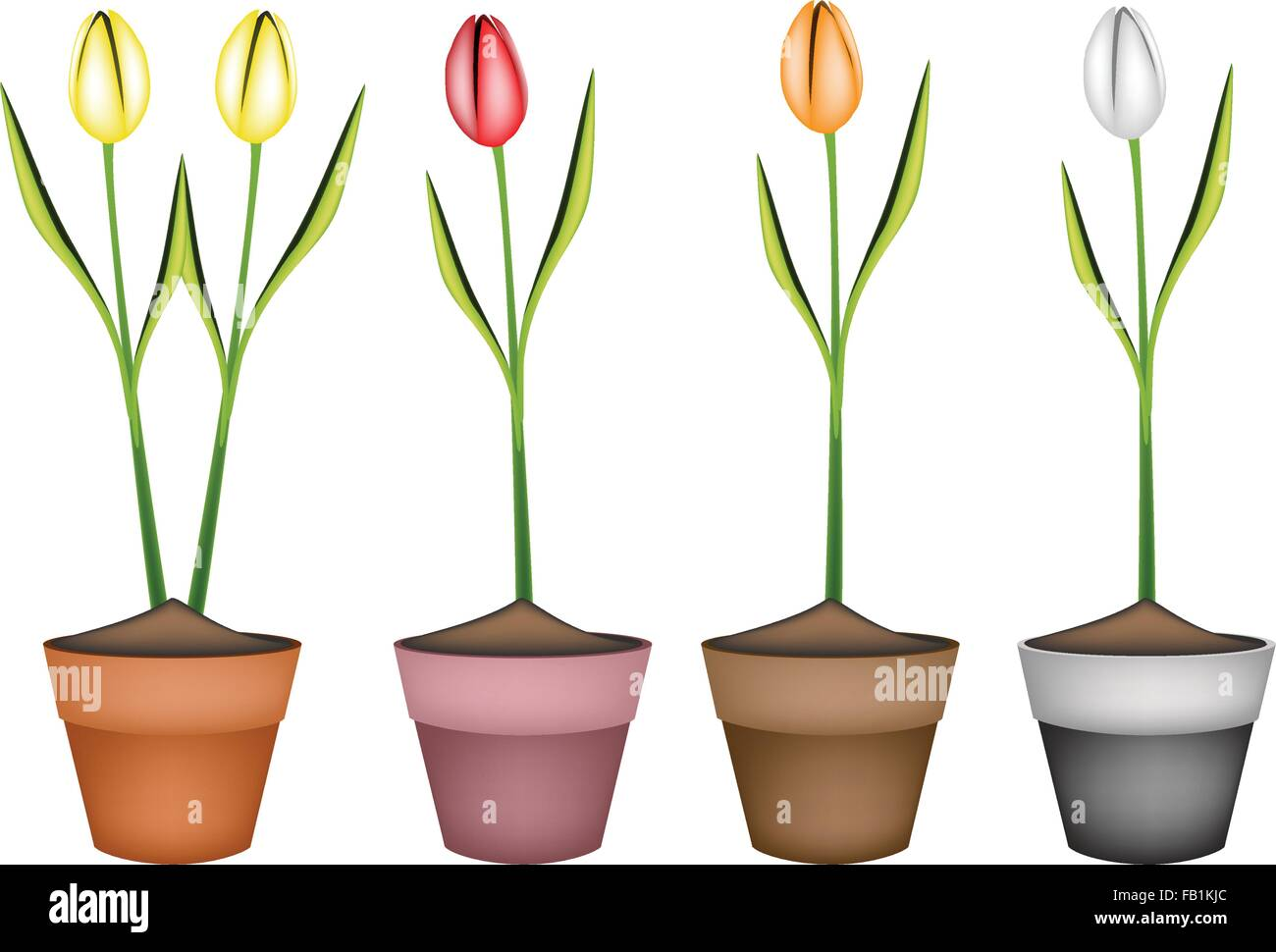 Schone Blume Illustration Sammlung Von Schonen Fruhling Bunte