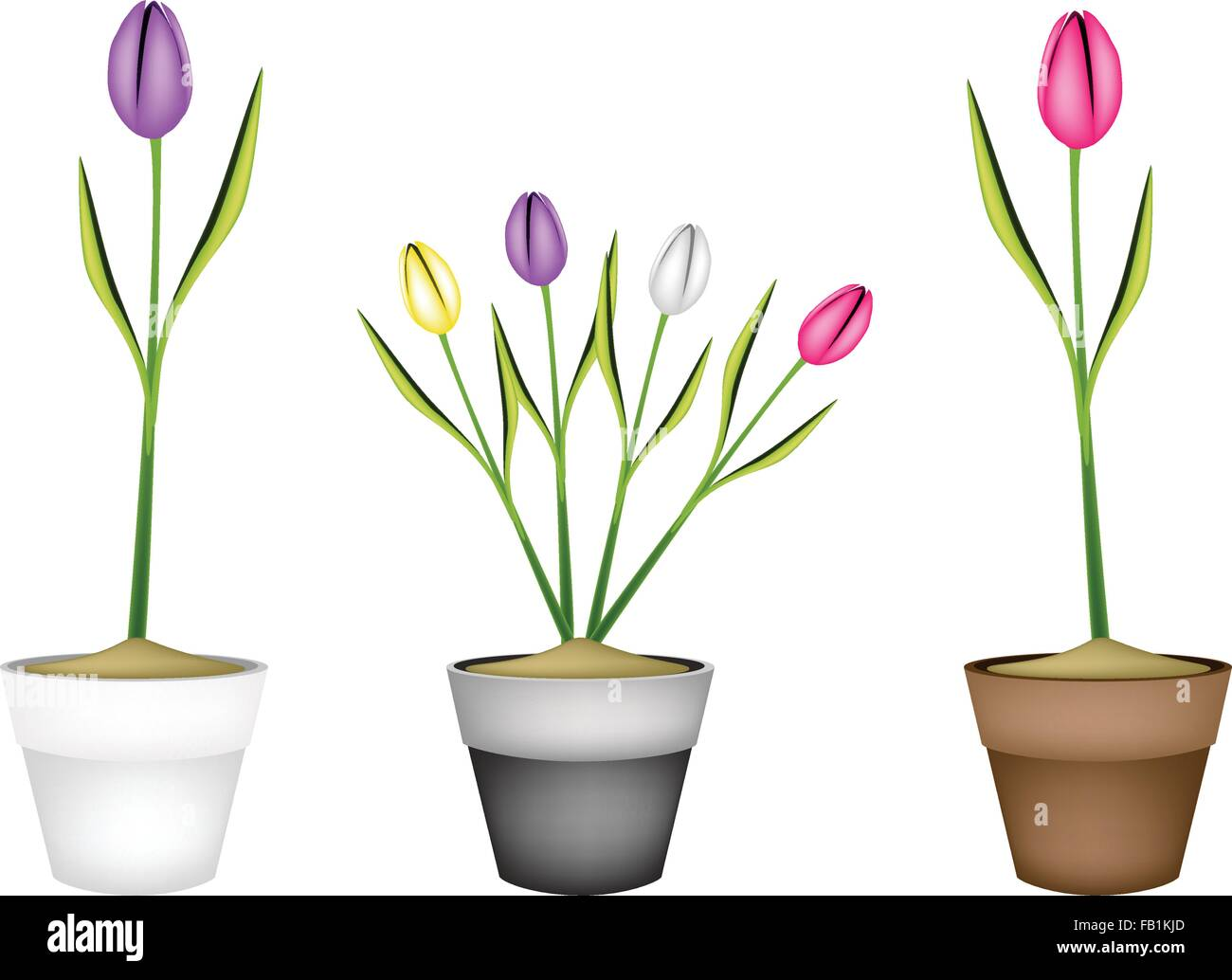 Schone Blume Illustration Sammlung Von Schonen Fruhling Tulpen In
