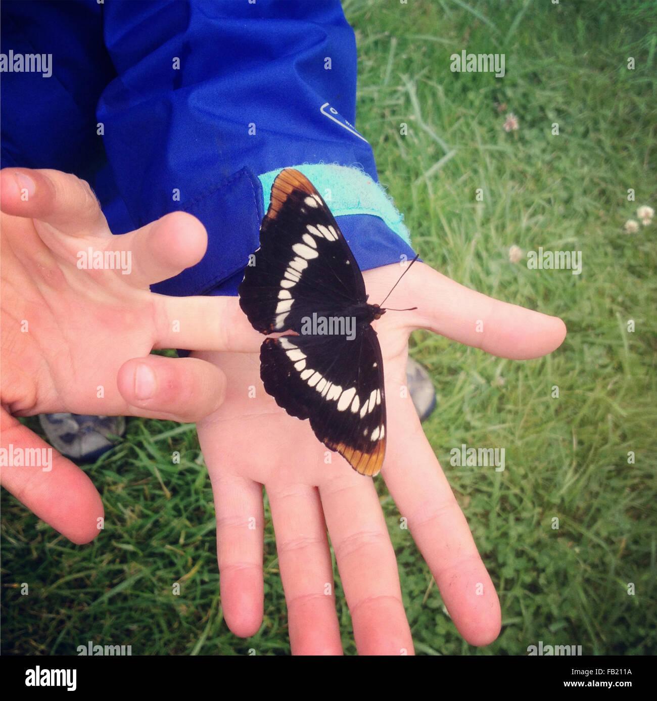 Schmetterling in Kinderhand Stockbild