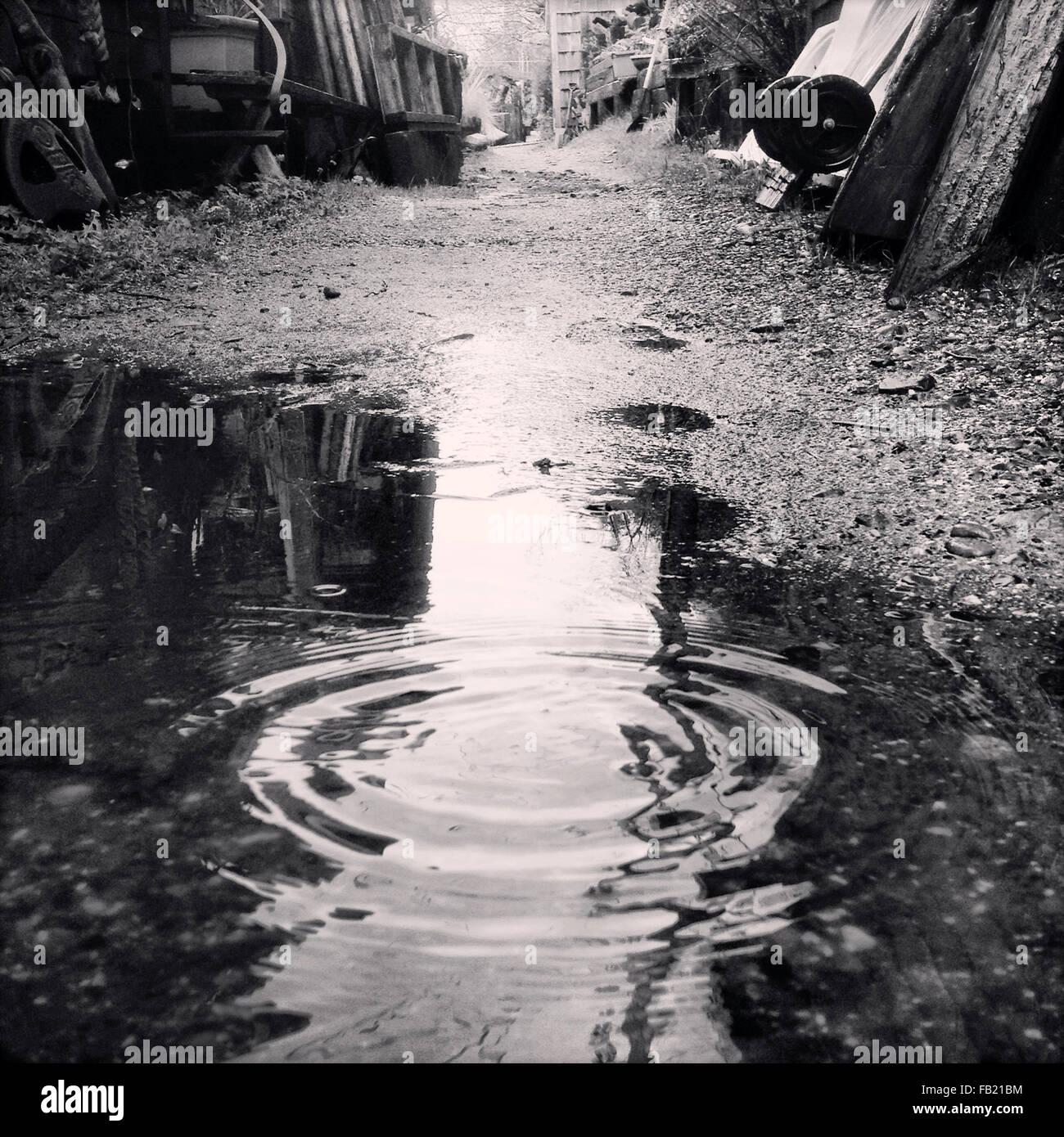 Regentropfen in Pfütze Stockbild