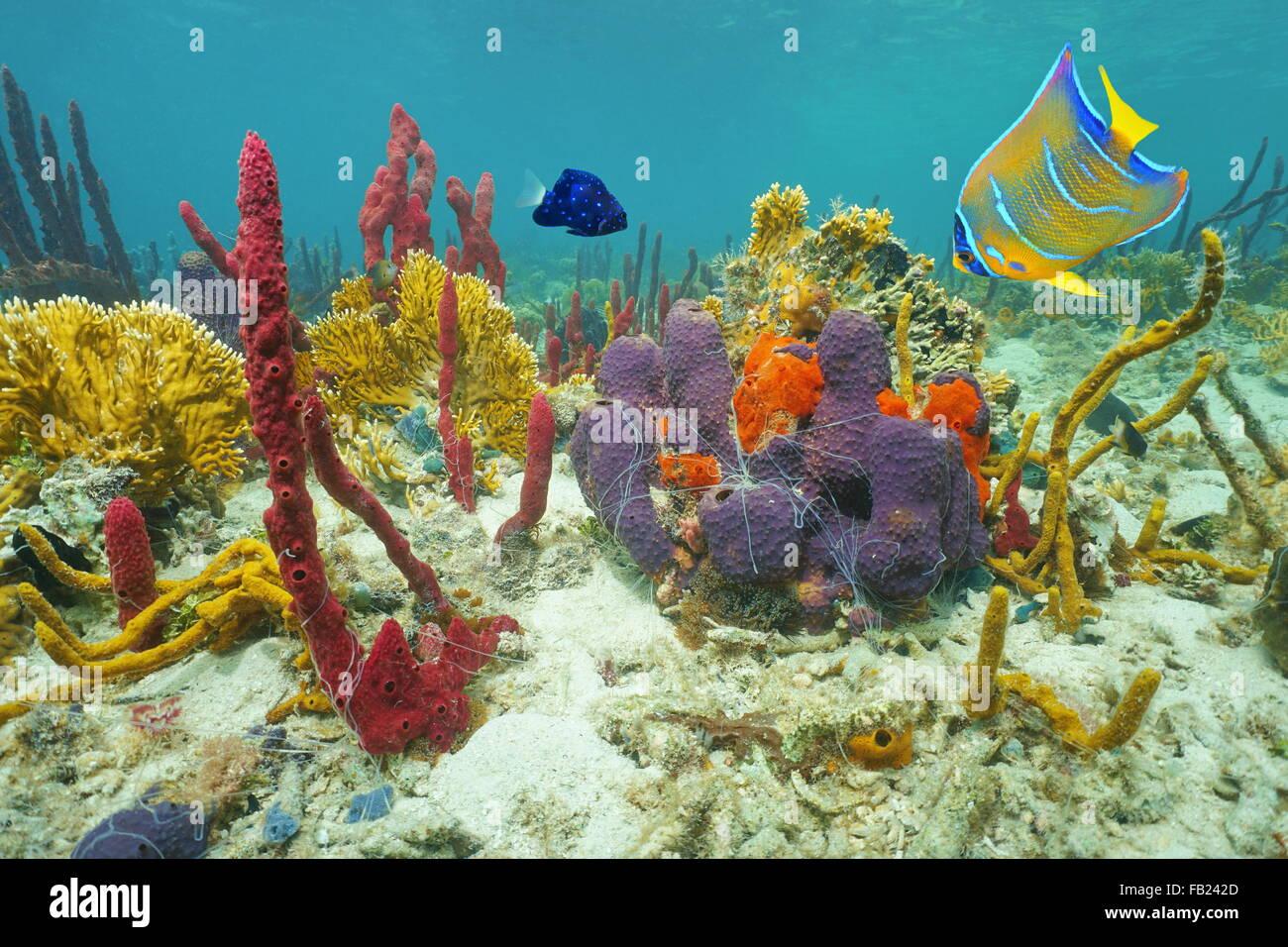 Ungewöhnlich Korallen Färbung Seite Bilder - Entry Level Resume ...