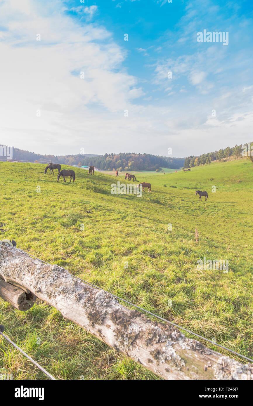 Pferde auf der Wiese, schwäbischen Alb, in der Nähe von Münsingen, Baden-Württemberg, Deutschland Stockbild