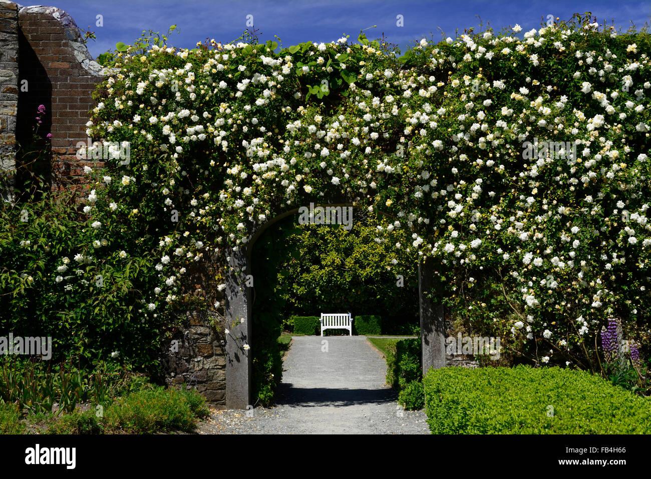 rosa pauls himalayan musk ummauerten garten eingang tor gateway abdeckung bedeckt rose rosen. Black Bedroom Furniture Sets. Home Design Ideas