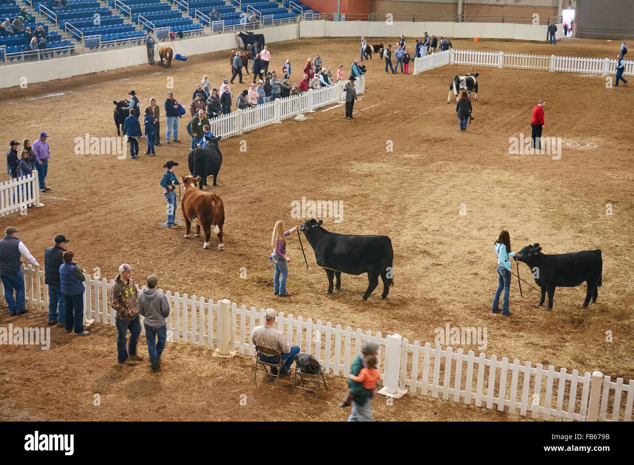Show Cow Stockfotos & Show Cow Bilder - Alamy