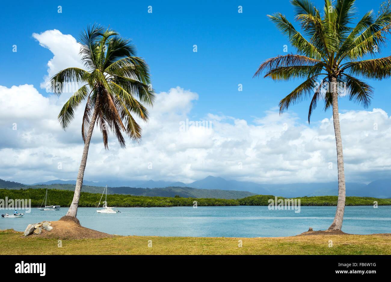 Australien, Queensland, Port Douglas, Palmen direkt am Meer Stockbild