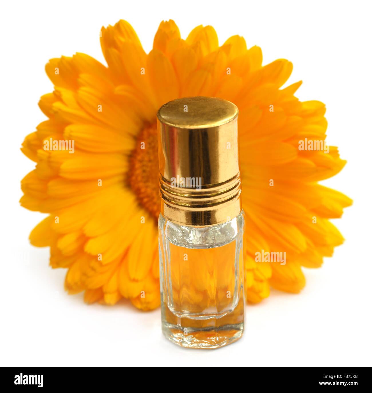 Nahaufnahme von Calendula Essenz Flasche auf weißem Hintergrund Stockbild