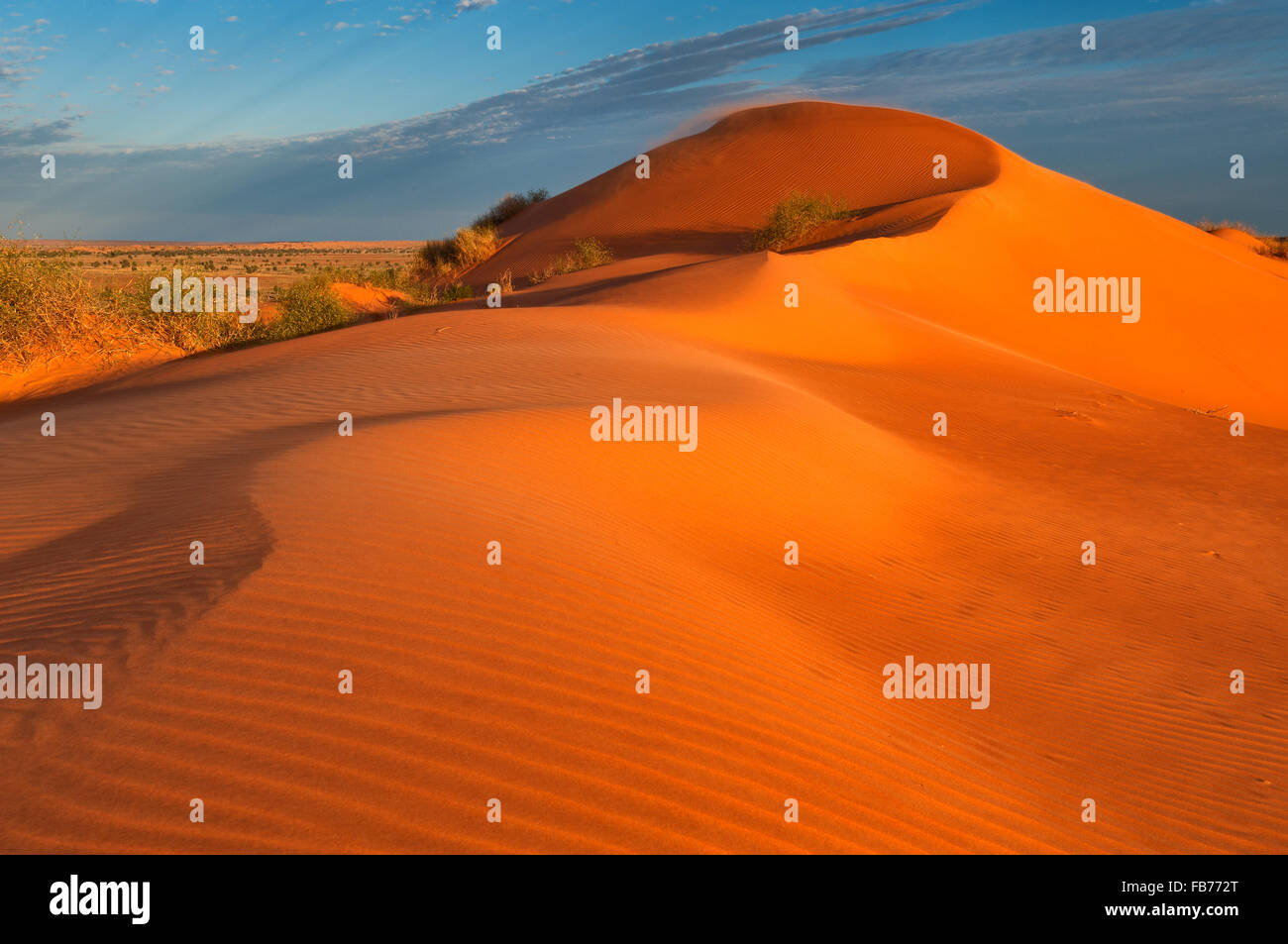 Roten Sanddüne in Simpson Wüste. Stockbild