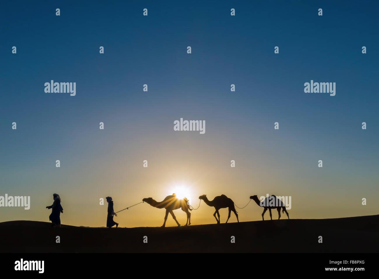 Nomaden mit Dromedaren (Kamele) bei Sonnenaufgang in der Sahara Wüste von Marokko. Stockbild