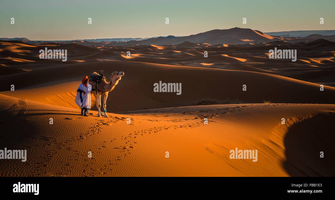 Mensch und Kamel, Erg Chebbi, Marokko Stockfoto