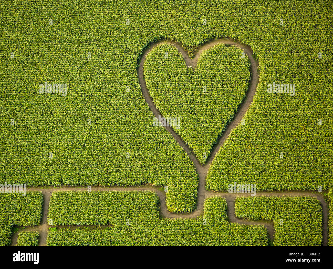 Liebemachen Auf Einem Maisfeld