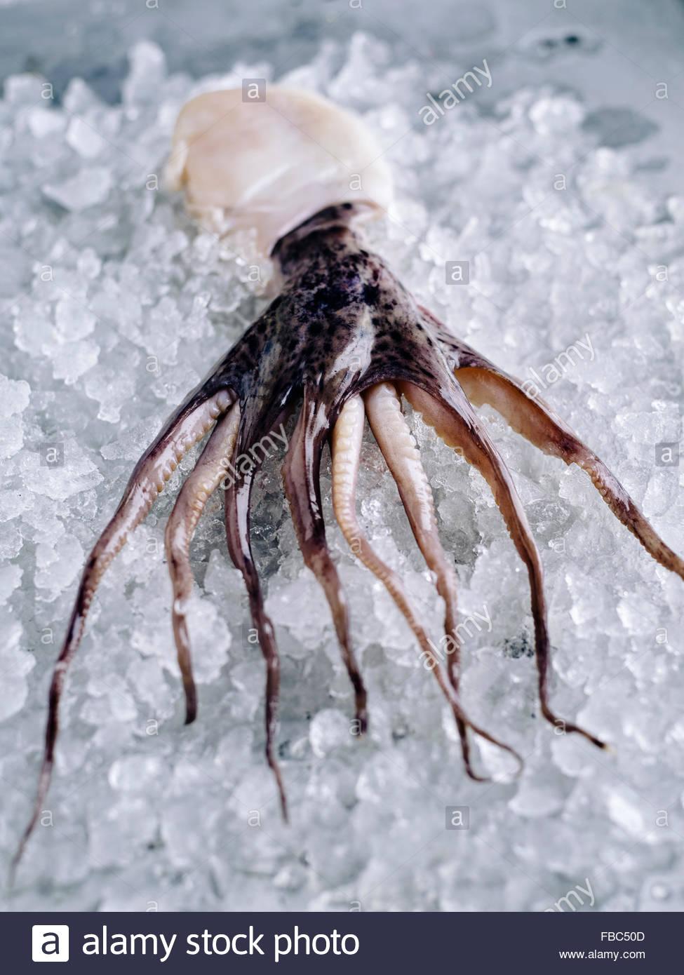 Eine kleine ganze Tintenfische auf Eis auf rustikalen Metalloberfläche Stockbild