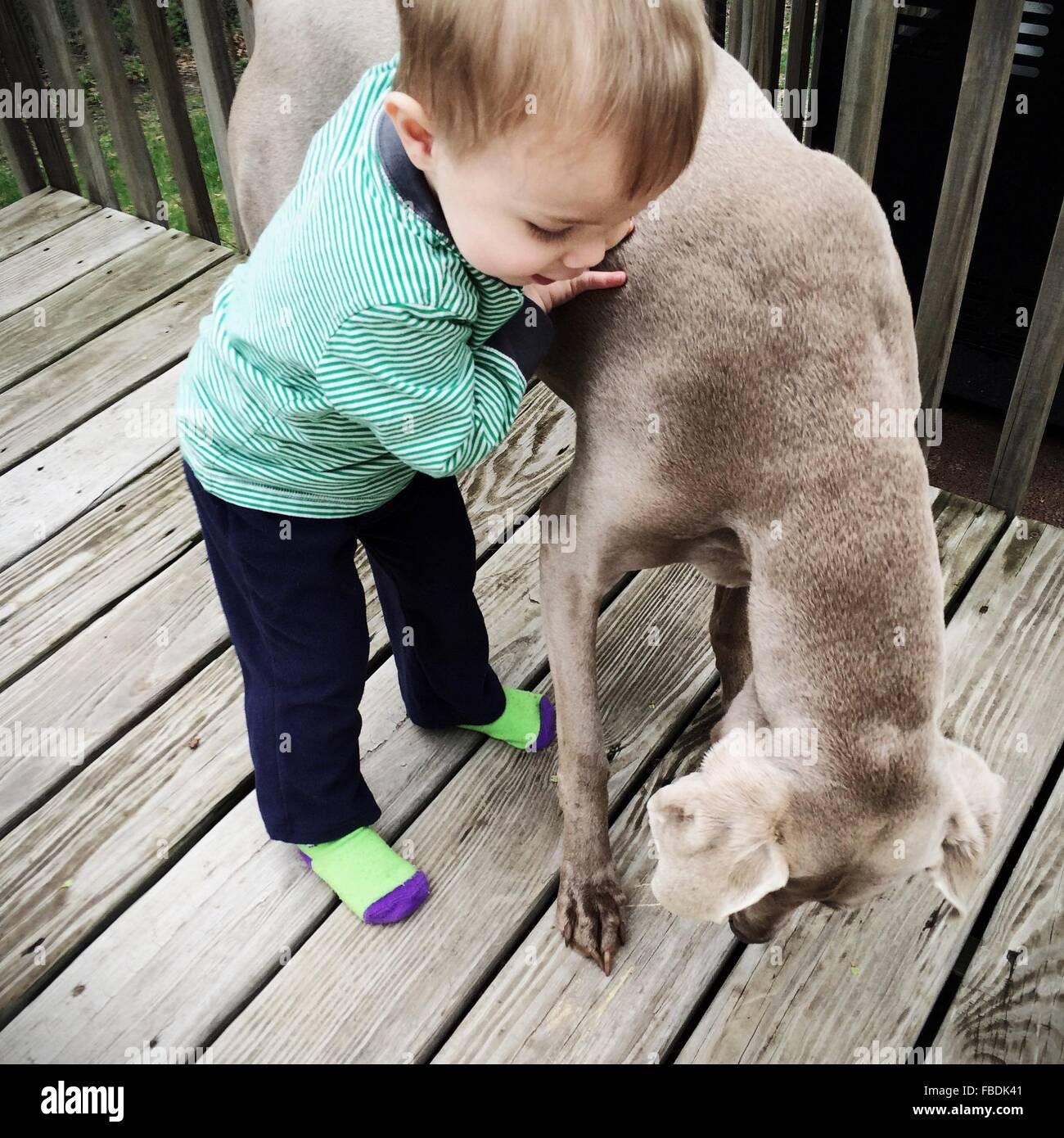 Jungen spielen mit Hund Stockbild