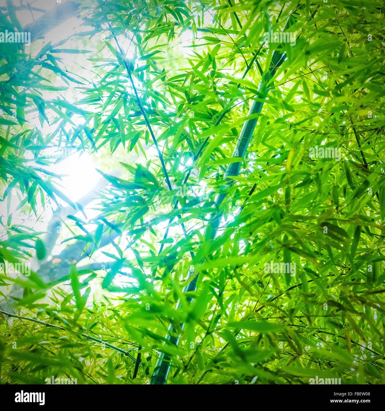 Niedrige Angle View Of Bamboo Groove Stockfoto