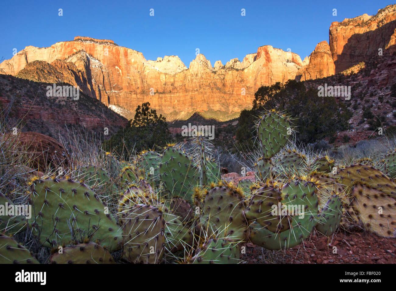 Kakteen und Berge Zion Nationalpark Stockbild