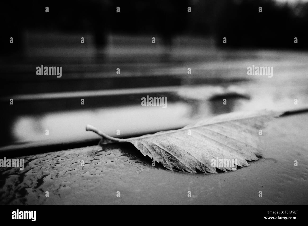 Nahaufnahme des Blattes auf nassen Straßen Stockbild