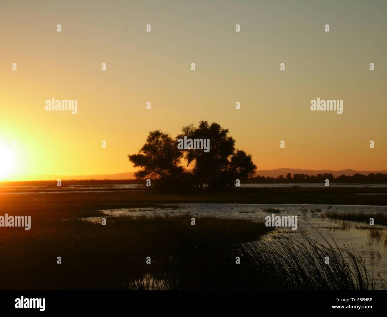 Bäume auf auffangene gegen Sonnenuntergang Himmel Stockbild
