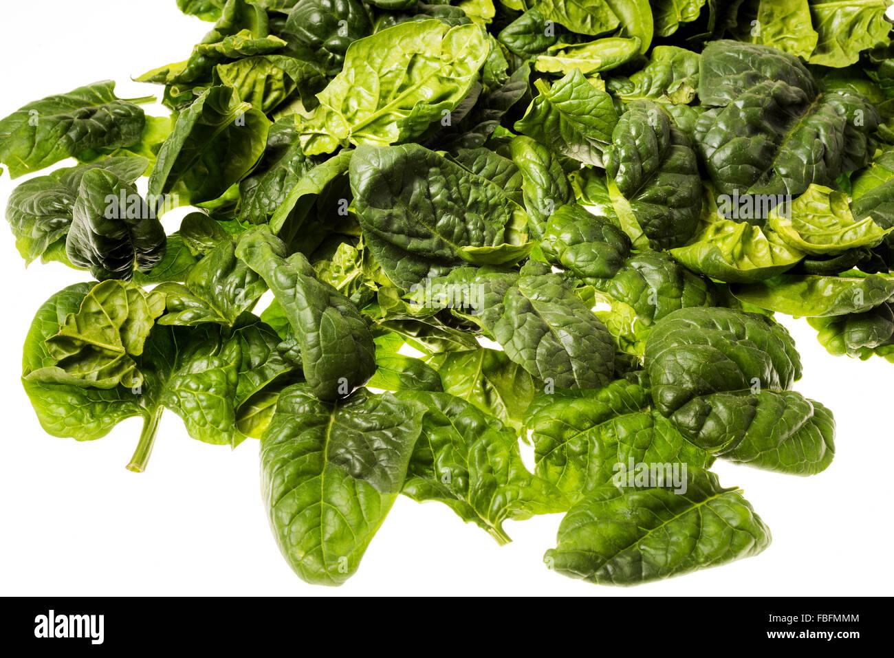Italienischer Blattspinat, frisch geerntete einzelne Blätter Salat Koch Kochen grüne Greenfood Essen Spinat Stockbild