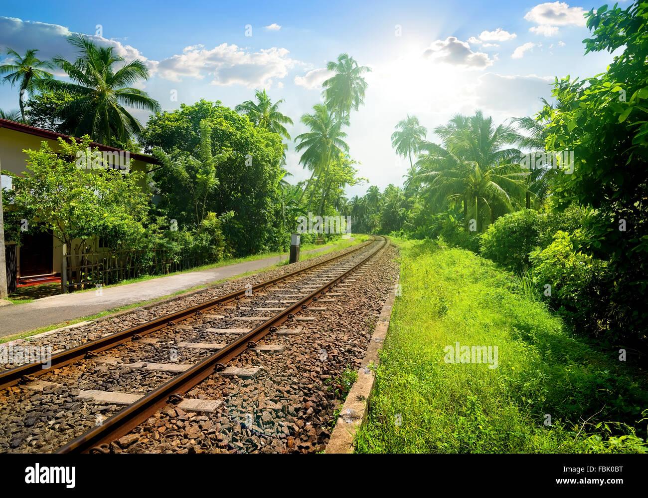 Eisenbahn durch grünen Palmenwald in Sri Lanka Stockbild