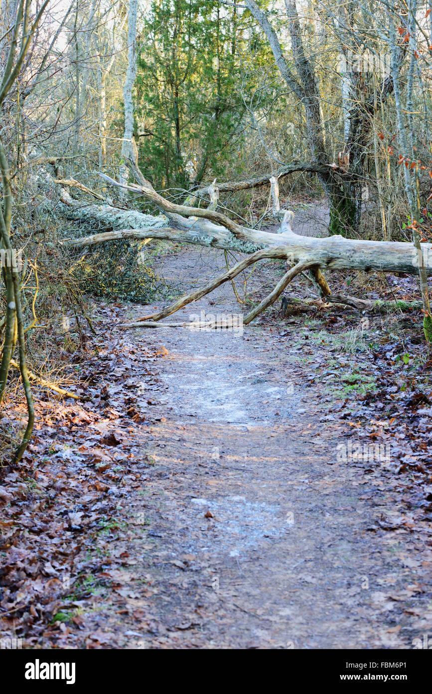 Ein Baum ist über den Wanderweg gefallen und ist ein Hindernis. Stockbild
