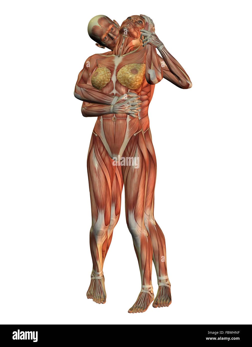 Charmant Muskel Des Halses Galerie - Anatomie Ideen - finotti.info