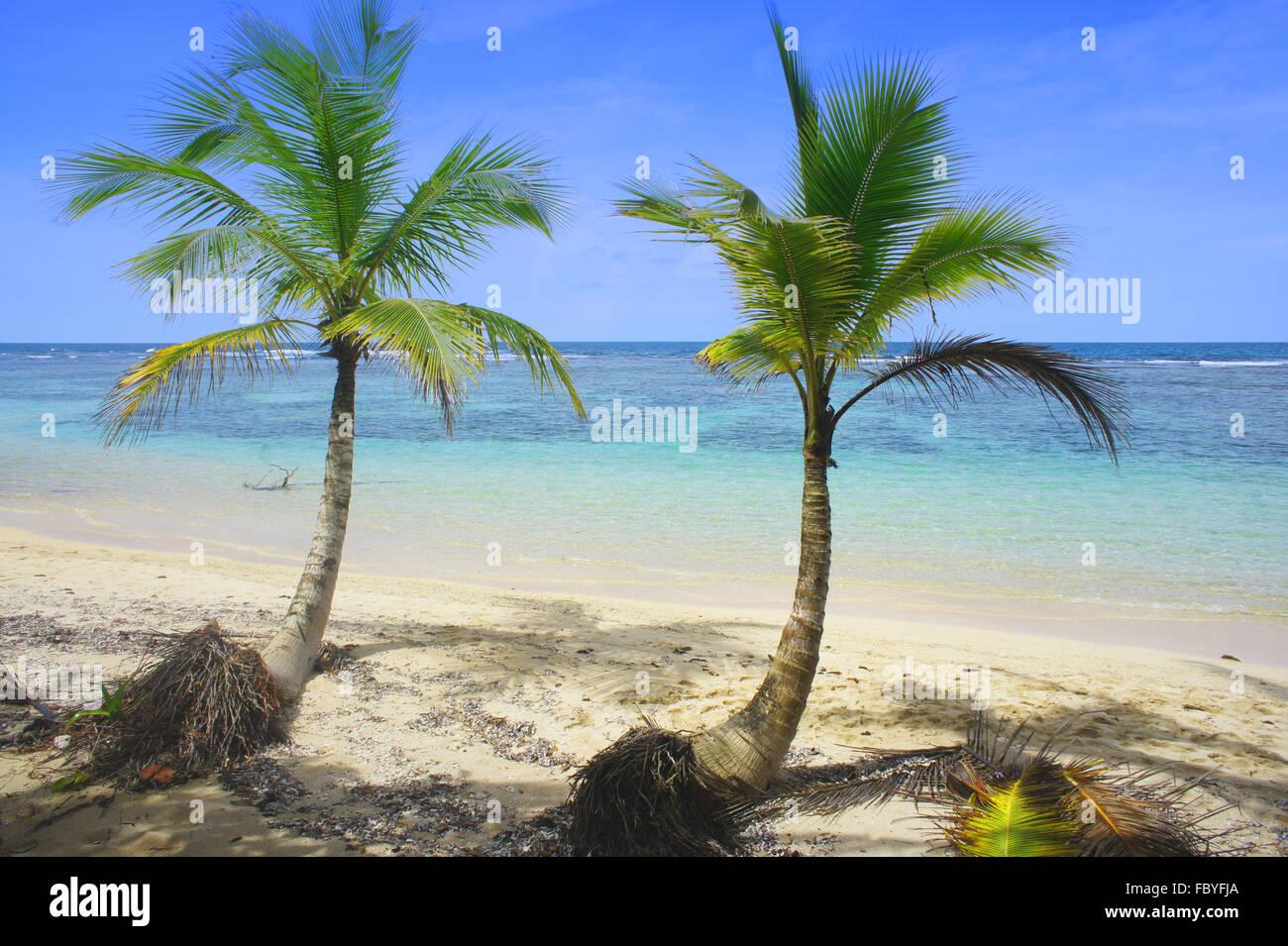 Palmzweig am Karibik-Strand Stockbild