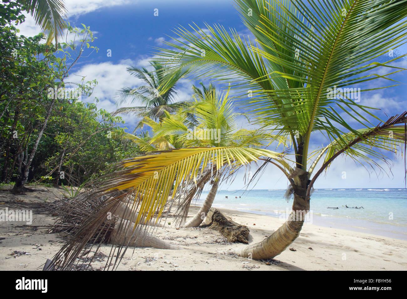 Impressionen aus Costa Rica Stockbild